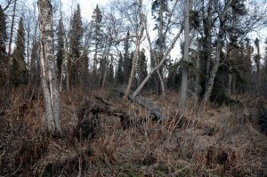 Kenai Peninsula land for sale, Alaska land for sale