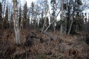 Kenai Peninsula land for sale, Alaska land for sale