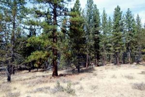 northern california land sales, modoc land sales, california pines land for sale